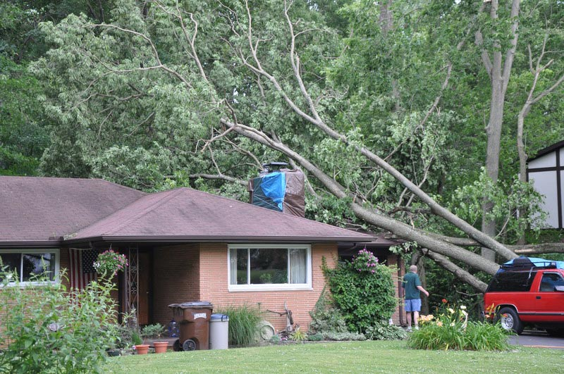 lawyers for tree damage