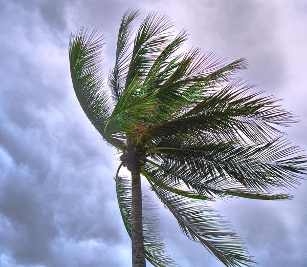high wind storm damage trees