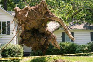 tree damage lawyers